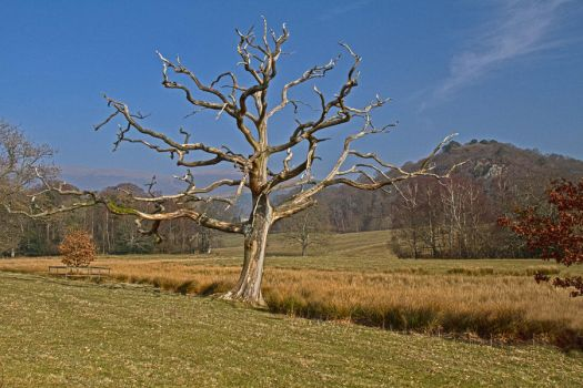 Lone Tree in Keswick by Rebacan