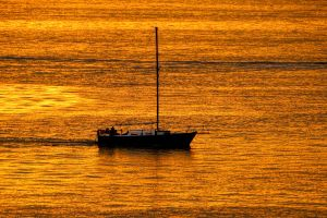 sea of gold by Mittelfranke
