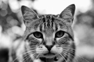Portrait of my Cat by pohlmannmark