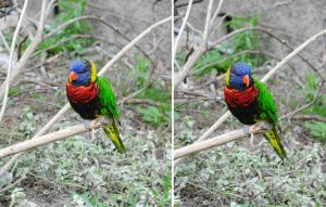 Zoo 7 Rainbow Lorikeet by PirateLotus-Stock