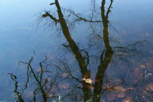 reflection of tree in water by bipolargenius