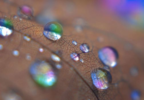 Just a Drop of Color by martintinaz
