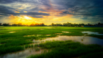 After the rain by YongL