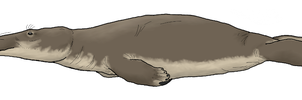 Crocodile Seal by WSnyder