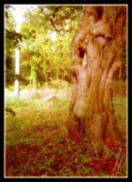 Autumn Ent 3 by Forestina-Fotos