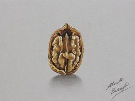 Wallnut DRAWING by marcellobarenghi