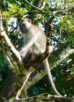 Mr Macaque by devonette