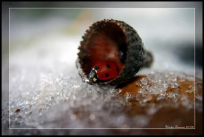 Iced Ladybird by GeodeLady