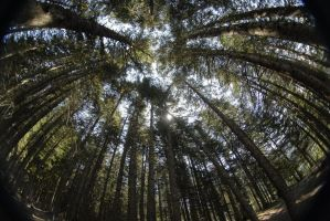 forest thru a fisheye by segglehellet