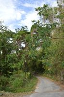 End of the coast northwest road of Martinique by A1Z2E3R