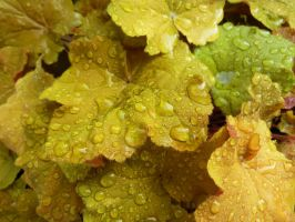 Rain-soaked Autumn Leaves by MogieG123