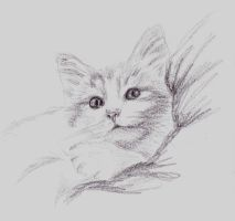 Cat Resting by letmeusemyname