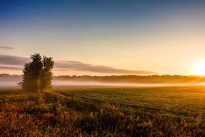 Morning Fog on the Soybeans by dkwynia