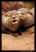 Otterly Adorable II by TVD-Photography