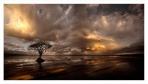 LONELY TREE by Valentin2007