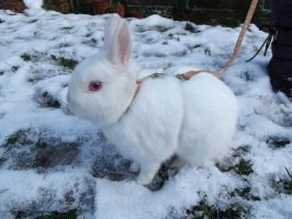 Snow Miffy by Candyfloss-Unicorn