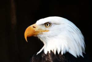 Eagle eye by maddog1138