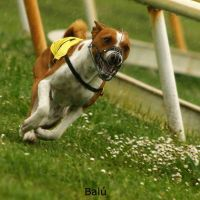 Balu2 by Basenji-fan