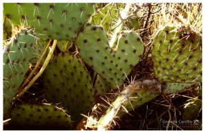 Nopal Heart by LDGSherar