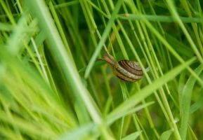 Snail in the grass by lapis-lazuri