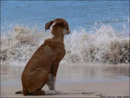 Beach Pup by Tricia-Jayne