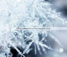 Frost crystals by RBaileyx