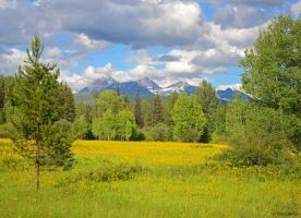 Mountain Meadow by TerribleTer