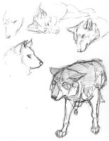 Wolves by tigrin