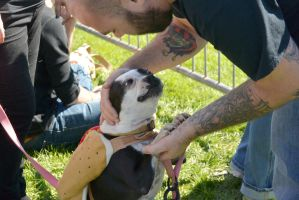 2014 Dog Festival, A Hot Dog Love by Miss-Tbones