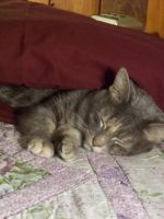 Kitty Underneath Pillow 2 of 2 by shelbysingswords