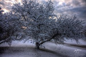 HDR Winter Tree by Nebey