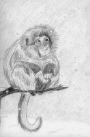 Monkey in the Snow by clarinetplayer