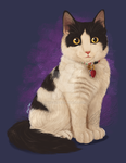 :: Shiraz the cat :: by IvyBeth