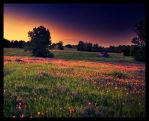 Field of Dreams by FasterThanChris