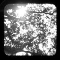 TTV-Branches by Dreams-Made-Flesh