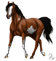 Painted Trot by LianeDesigns