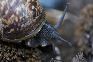 Snail by ianwh
