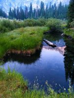 Northern California in the Wild by TheForestWhispers