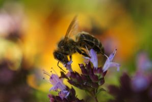 Nectar For Lunch by Gresscam