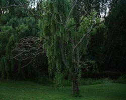 Willow 2 by vamprys-stock