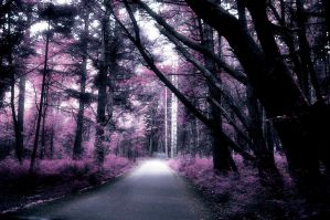 IR Effect - Forest by Cyberlis