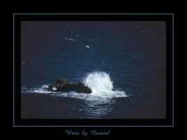 Wave by caracal