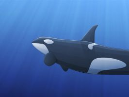 Vectorised Orca Wall by timbo