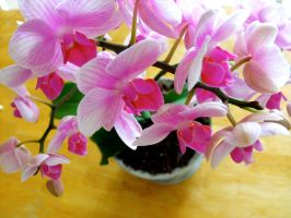 Pretty Orchid by Dani-the-Naiad