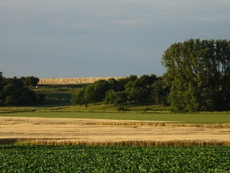 Fields and Trees by ermuel