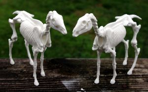 Resin Horse Skeleton III by SovaeArt