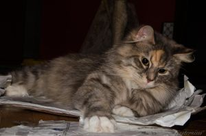 Cat and paper envelopes - 3/31 by Finsternisss