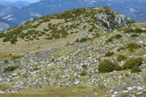 Wild lavenders on Alps in Provence by A1Z2E3R