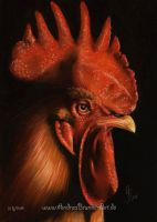 rooster by Drehli