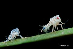 Fresh from moult by melvynyeo